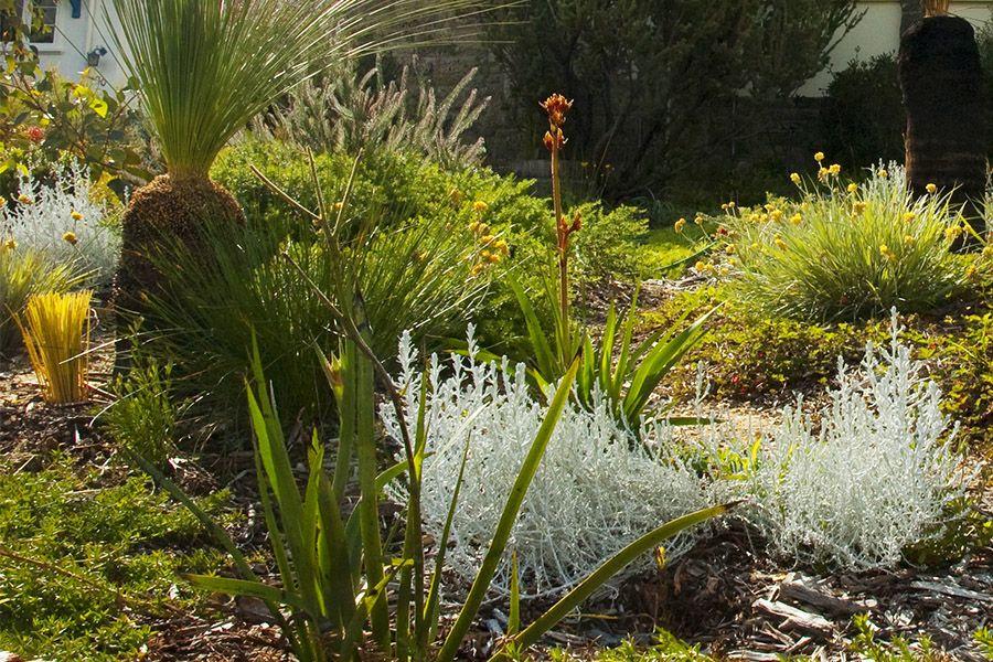 Pin on Garden: WA Native plants