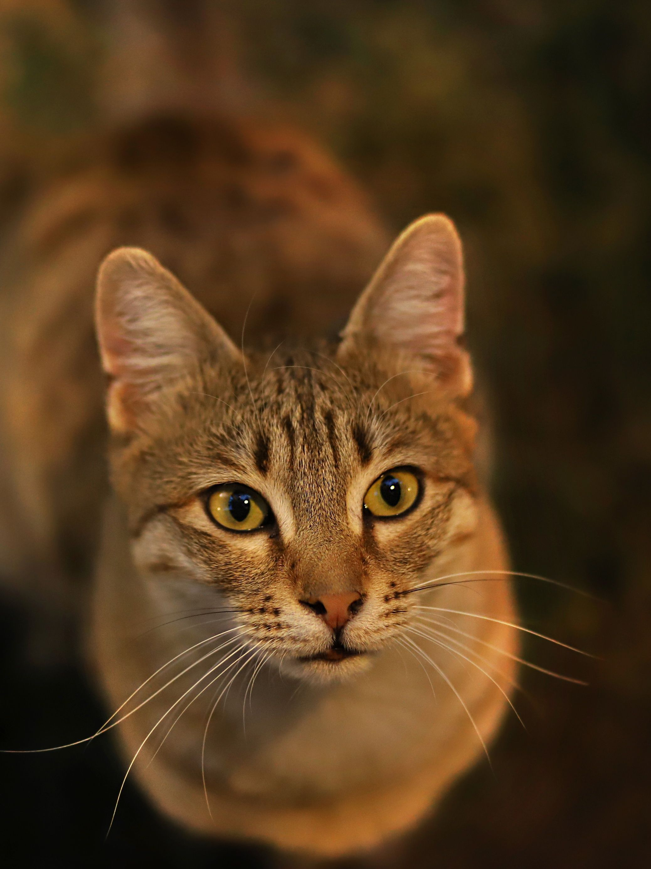 Tabby Cats Gallery Cats, Orange tabby cats, Beautiful cats