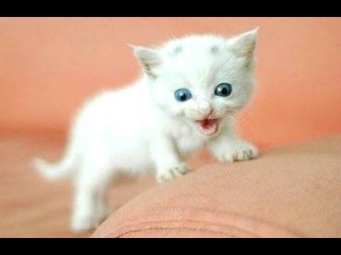 Funny Cats And Kittens Meowing Compilation 2015 New Tierbabys Tiere Susse Tiere