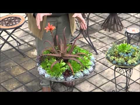 Succulent Dish Gardens Attila S Way Part 2 Youtube Jardim