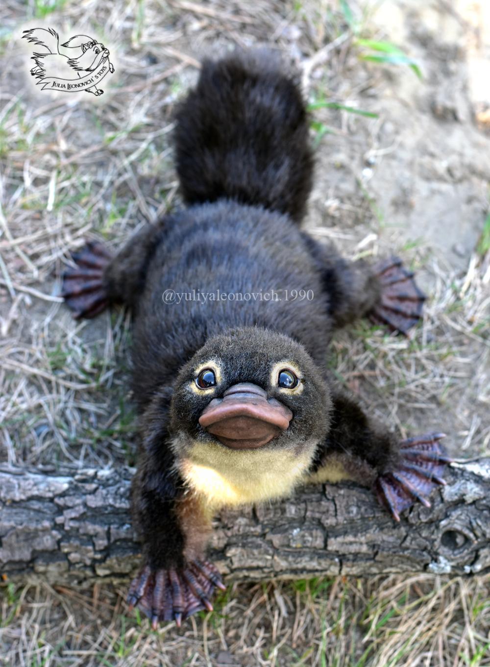 Cucciolo di ornitorinco von YuliaLeonovich auf … – #auf #cub #platypus