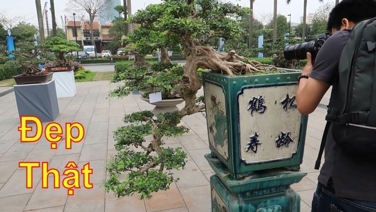 Ghim Tren Bonsai Art