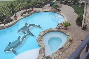 Killer whales painted on swimming pool bottom>>>that would sooooooo ...