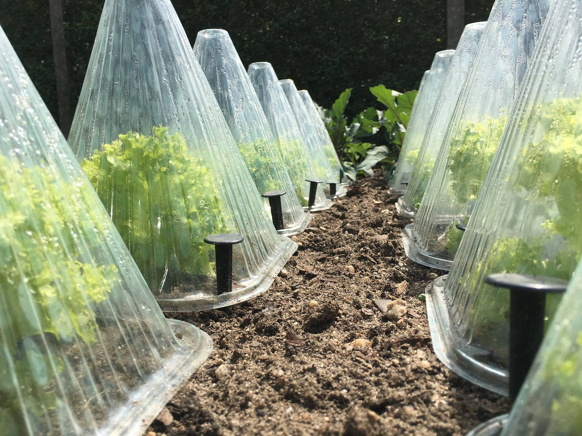 Protecting The Garden From Frost Temperature Lows For