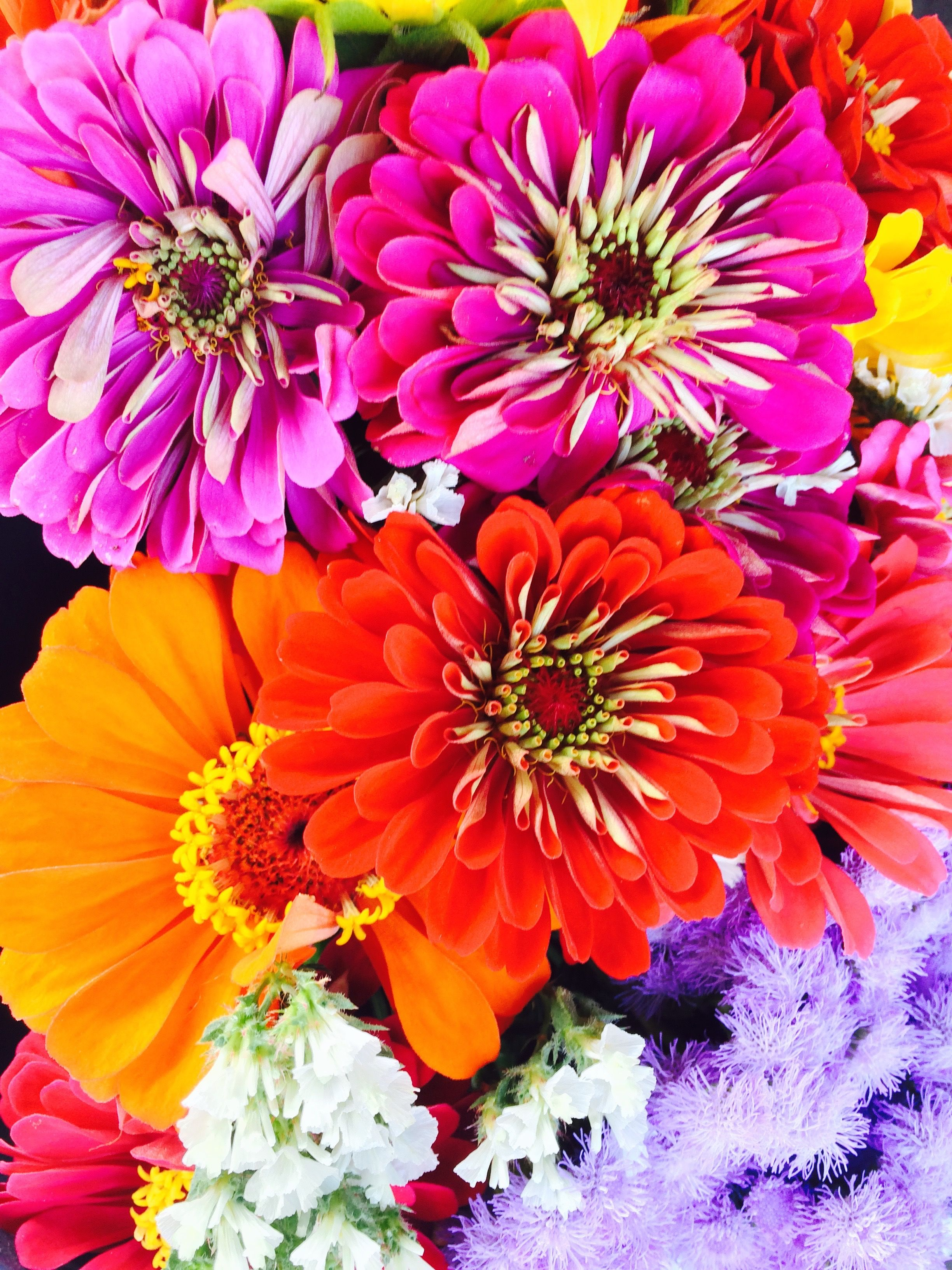 West Windsor Farmers Market - local flowers, beautiful color ...