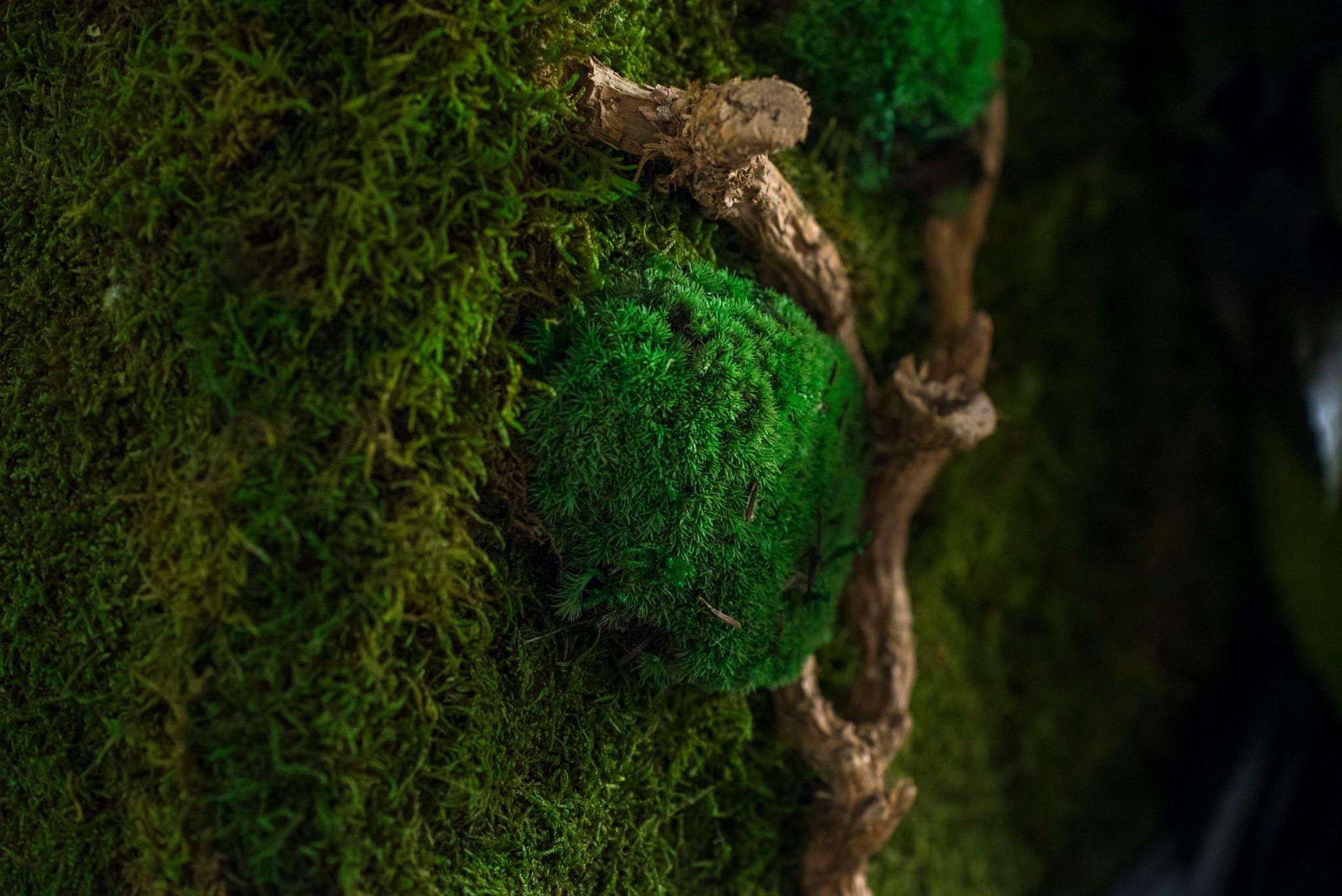 Pareti Verdi Verticali Costi domenico moscatiello from ristrutturazione garantita