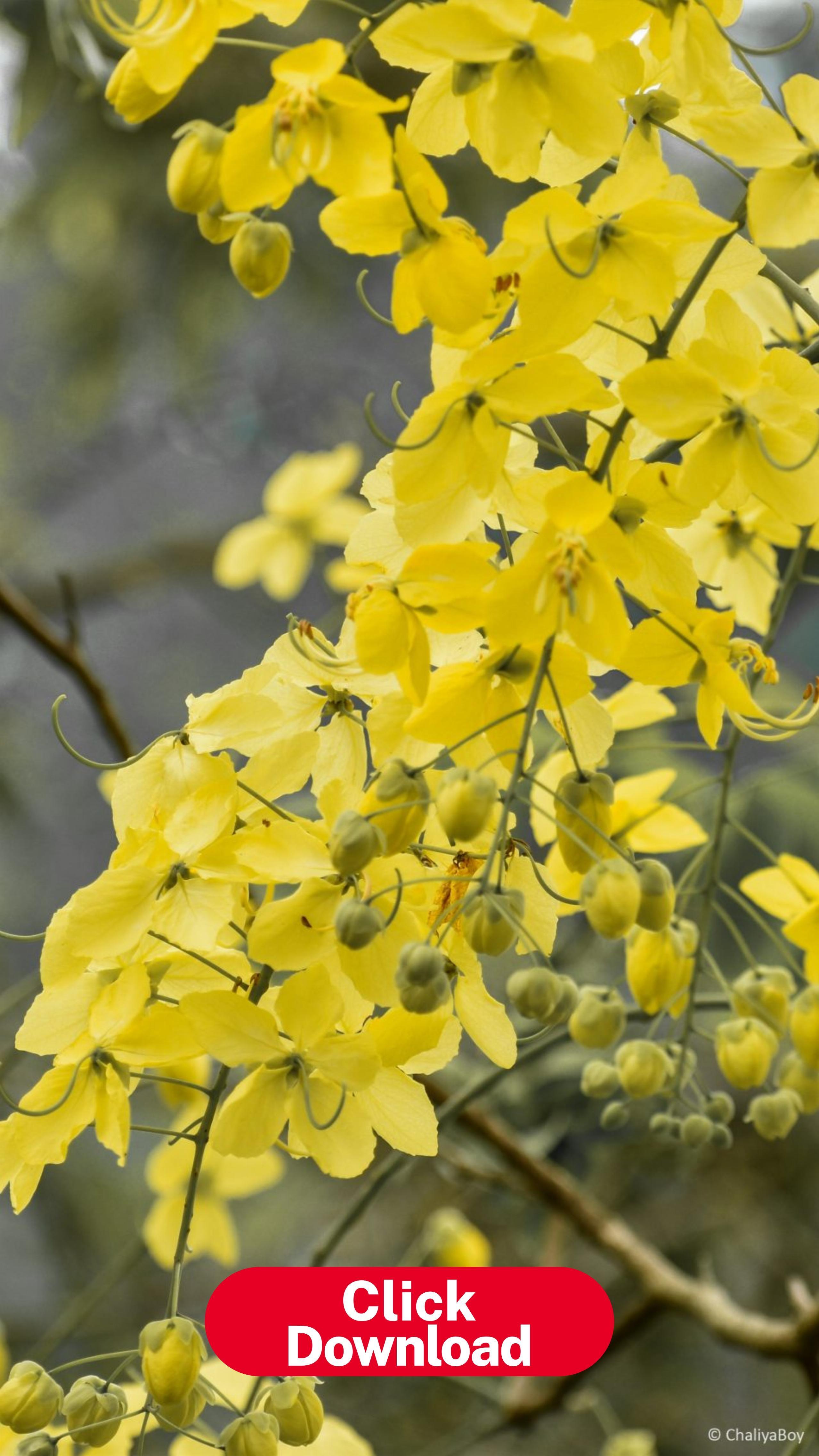 Las Canciones Mas Escuchadas En El Mundo Sazum Mobile Wallpaper Flower Wallpaper Amazing Flowers Fantastic yellow flower hd wallpaper