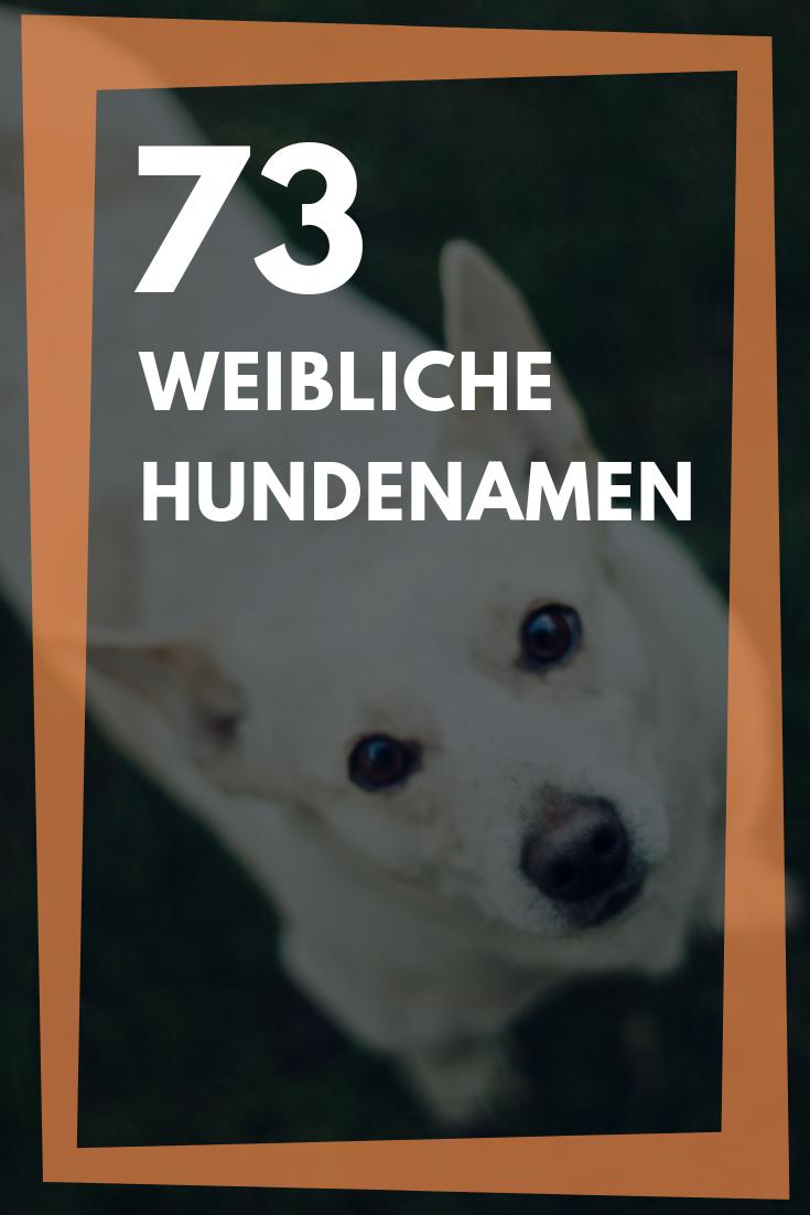 Weibliche Hundenamen 73 Coole Ausgefallene Und Beliebte Namen Fur Hundinnen Hundenamen Weibliche Hundenamen Namen Fur Hunde