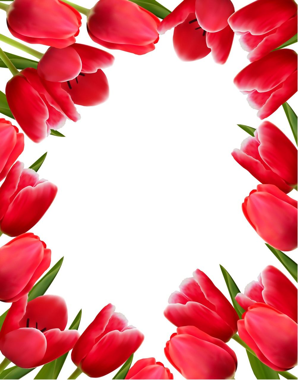 Flower Tulip Background 02 Flower Backgrounds Flower Frame Flowers