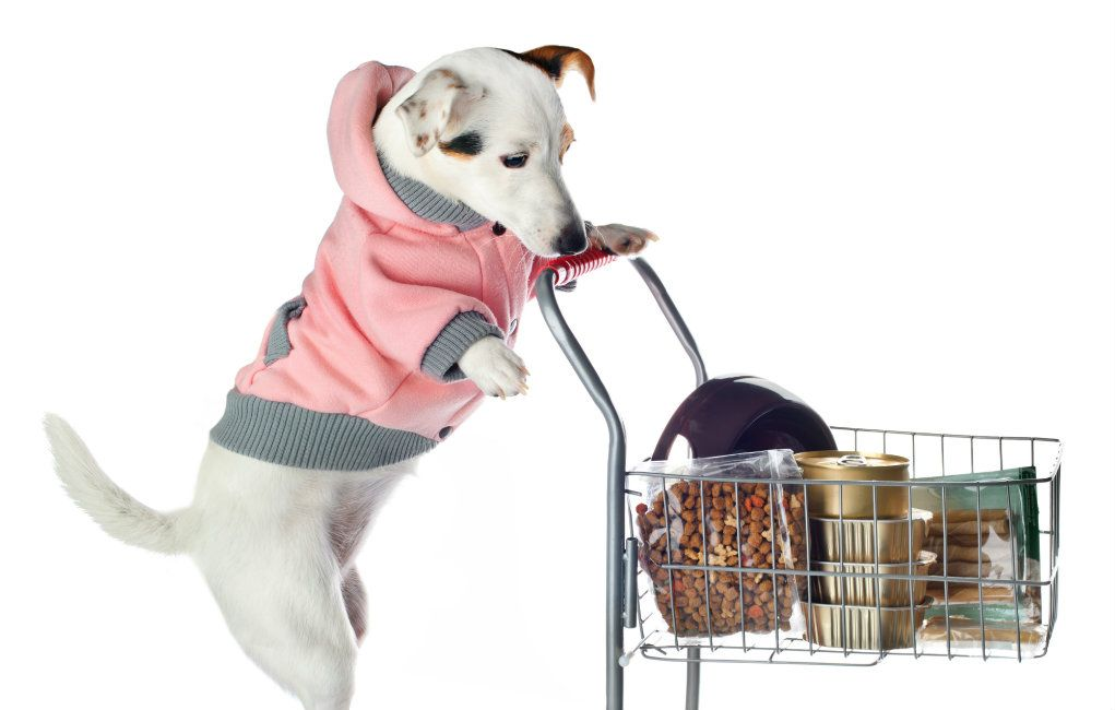 Pets On A Budget What S The Best Place To Buy Cheap Dog Supplies Cheap Dog Supplies Dog Supplies Cheap Dogs