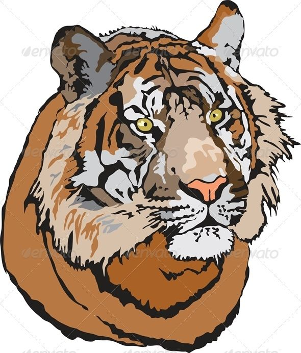 VECTOR DOWNLOAD (.ai, .psd) :: http://jquery.re/pinterest-itmid-1004777241i.html ... Head of Tiger ...  aggression, anger, animals, big, cat, danger, face, head, hunter, jungle, logo, nature, safari, tiger, wild, wildcat, wildlife, zoo  ... Vectors Graphics Design Illustration Isolated Vector Templates Textures Stock Business Realistic eCommerce Wordpress Infographics Element Print Webdesign ... DOWNLOAD :: http://jquery.re/pinterest-itmid-1004777241i.html