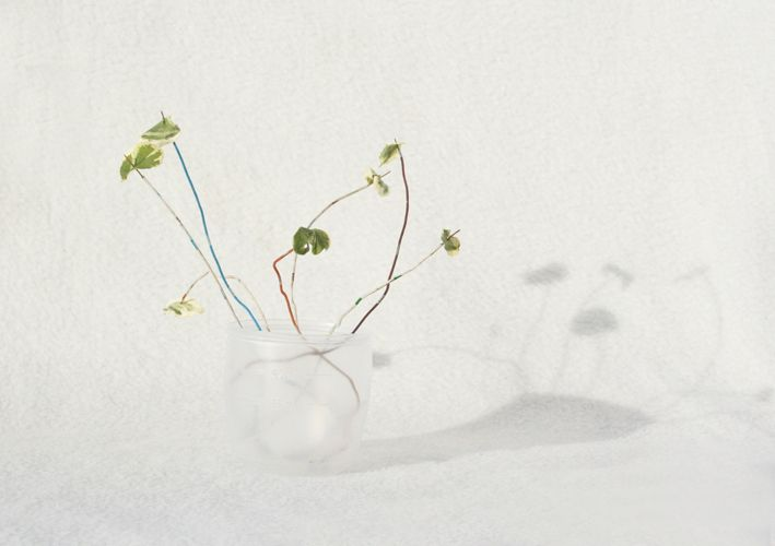 'Streetcombing project', living room plant, by Margo Weijer