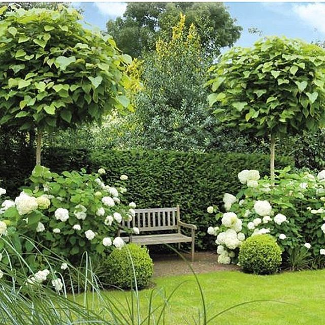 Beautiful design with mix of trees evergreen shrubs and for Evergreen pflanzen