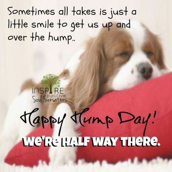 Happy Hump day | Happy wednesday quotes, Good morning ...