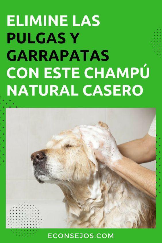 Elimine Las Pulgas Y Garrapatas De Su Mascota Con Un Champú Casero Y Natural Remedios Caseros Para Perros Pulgas Perros Pulgas Y Garrapatas