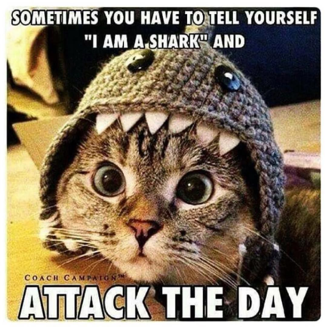 Go on, be a Shark and Seize the day! It is Entirely up to