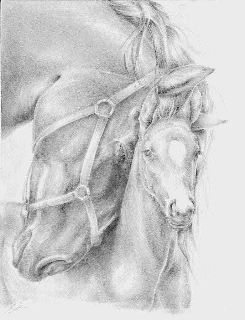 Merrie Veulen Paard Tekeningen Dieren Schilderen Dieren Tekenen