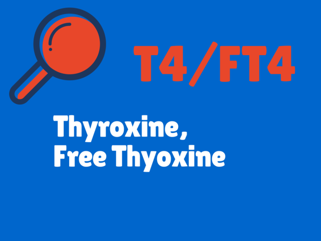 Pin On Thyroid Info