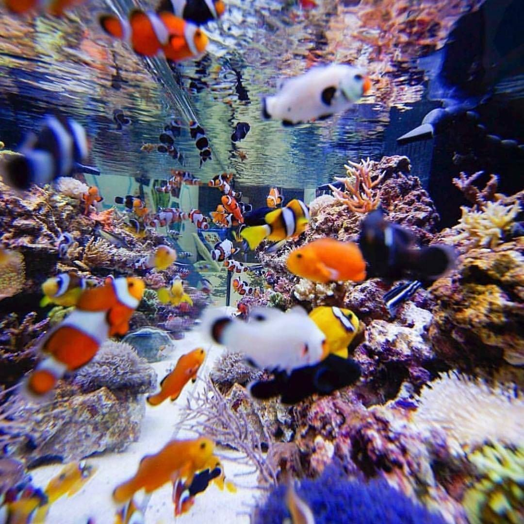 Aquariums image by Money&Dream Life   Animals&Nat ...