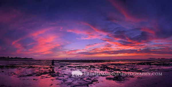 stitched panorama of a scenic sunset at low tide from Cholla Bay