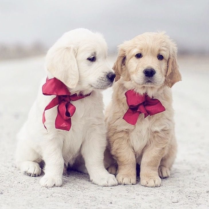 These 2 Puppies Look Like Stuffed Animals Cute Animals Cute