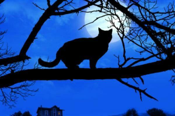 Cat in moonlight