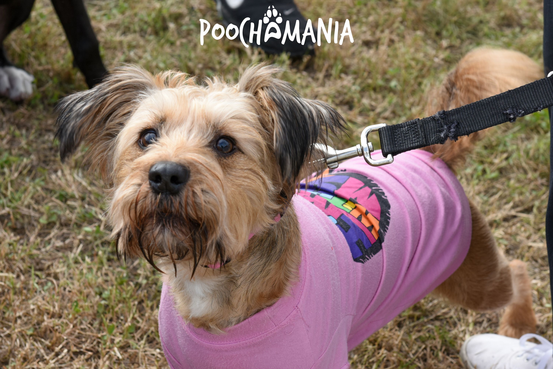 Pin by San Antonio Humane Society on Poochamania 2017