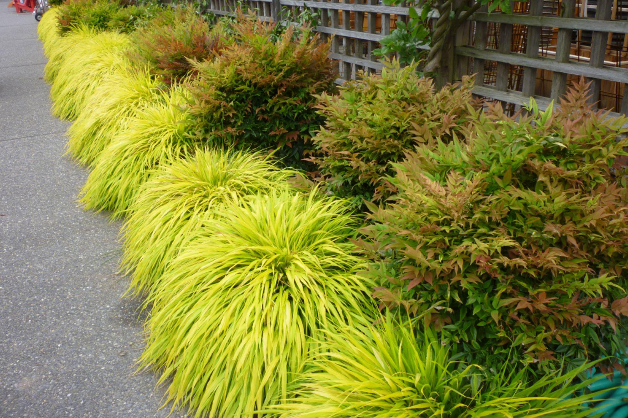 Mahoneys Garden Center - Using Ornamental Grasses In The Landscape