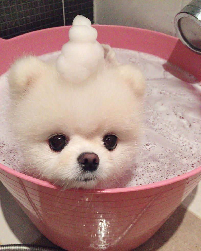 Cute Animals Images For Whatsapp Dp Cute Animals Baby The 50 Cutest Puppy Pictures Of All Time The 50 Cu In 2020 Pomeranian Dog Cute Baby Animals Cute Baby Puppies
