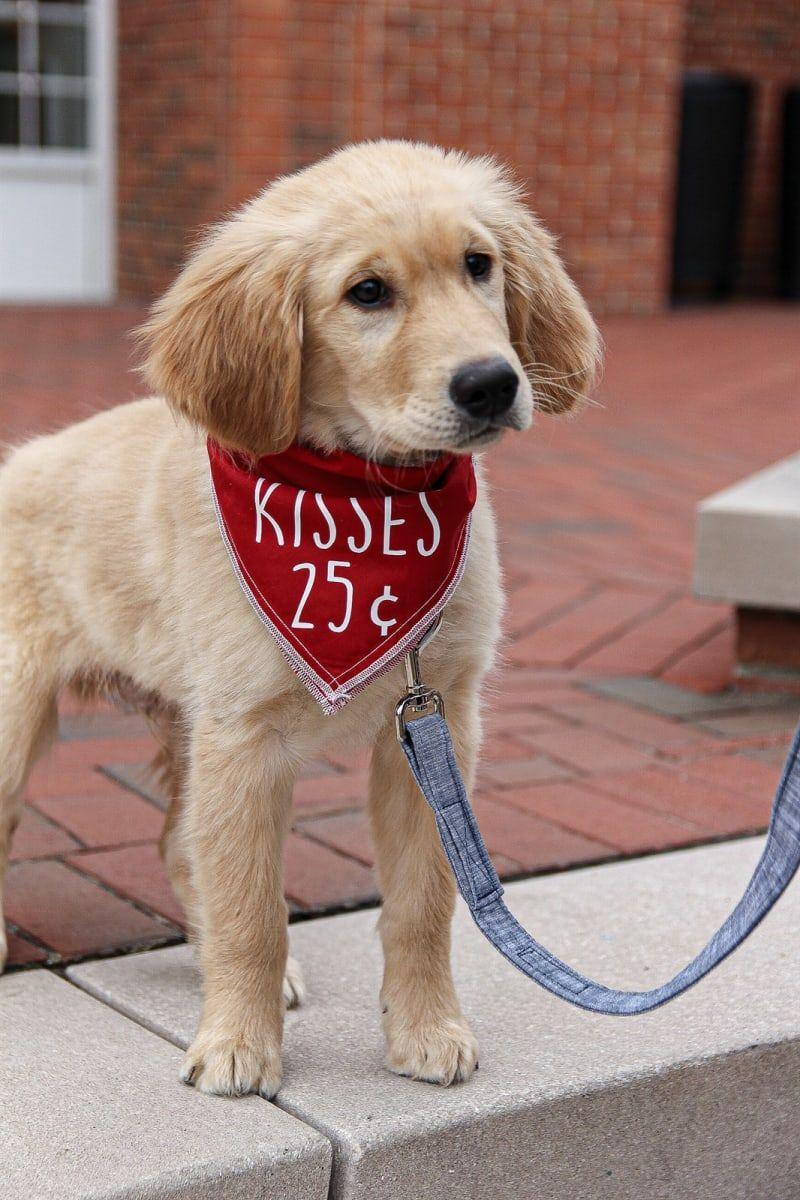 Valentine S Day Dog Bandanas Valentines Day Dog Dog Bandana Dog Bandana Diy