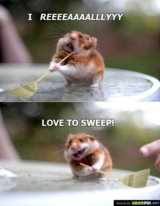 Hamster Lustige Bilder