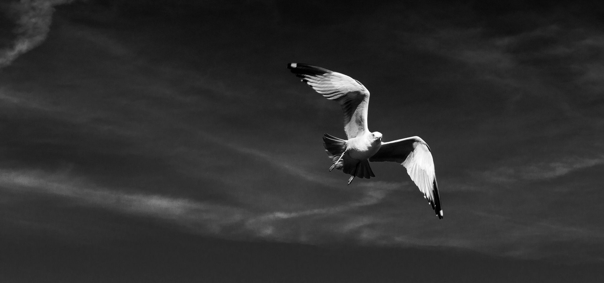 https://flic.kr/p/ngVrrT | Seagulls1 | I came across some people feeding the seagulls by throwing bread in the air. I was so amazed at how the seagulls didn't seem to miss a beat as they caught the bread in mid air. When I looked at the pictures on my computer, I was even more amazed at the way they used their wings to maintain their position in the air.
