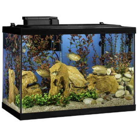 Pets Products In 2019 20 Gallon Aquarium Aquarium