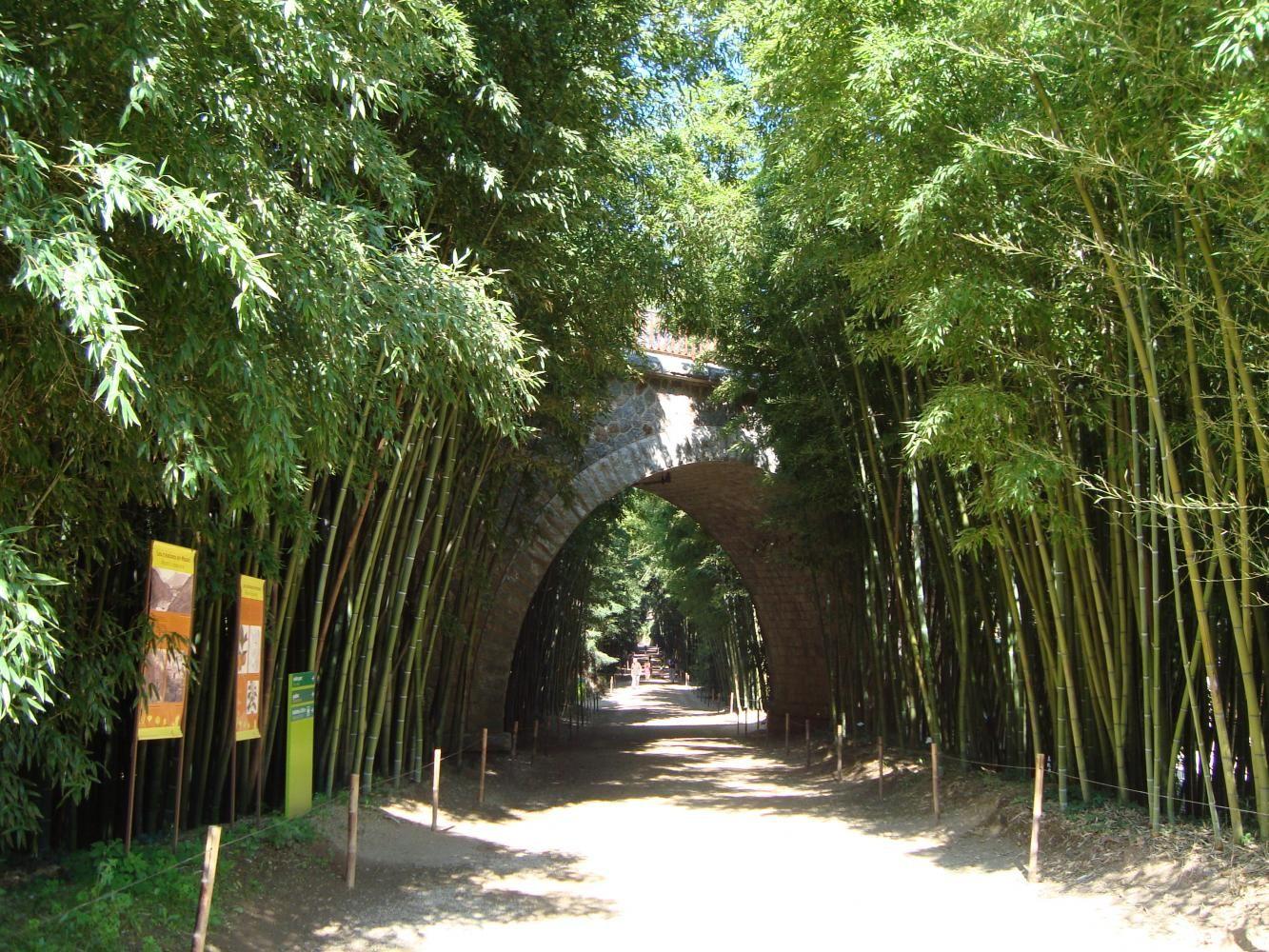La bambouseraie de prafrance les jardins de france pinterest roussillon france le - La bambouseraie a anduze ...