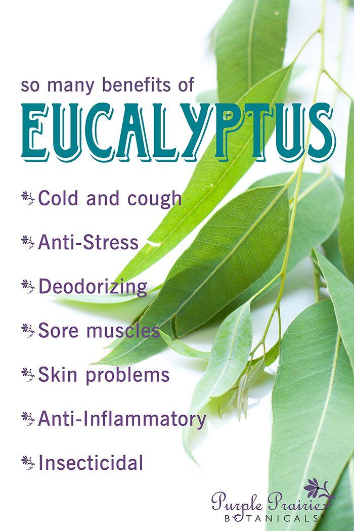 Ahhhhhh Eucalyptus….A breath of fresh air! Save 20 on