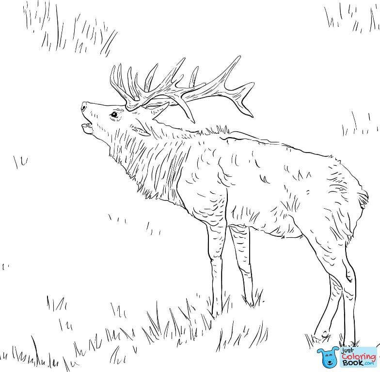 Elk Coloring Pages Free Coloring Pages In Young Elk Coloring Pages Printable Deer Coloring Pages Free Coloring Pages Horse Coloring Pages
