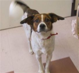 Rosco Is An Adoptable Spaniel Dog In Detroit Lakes Mn Hello My