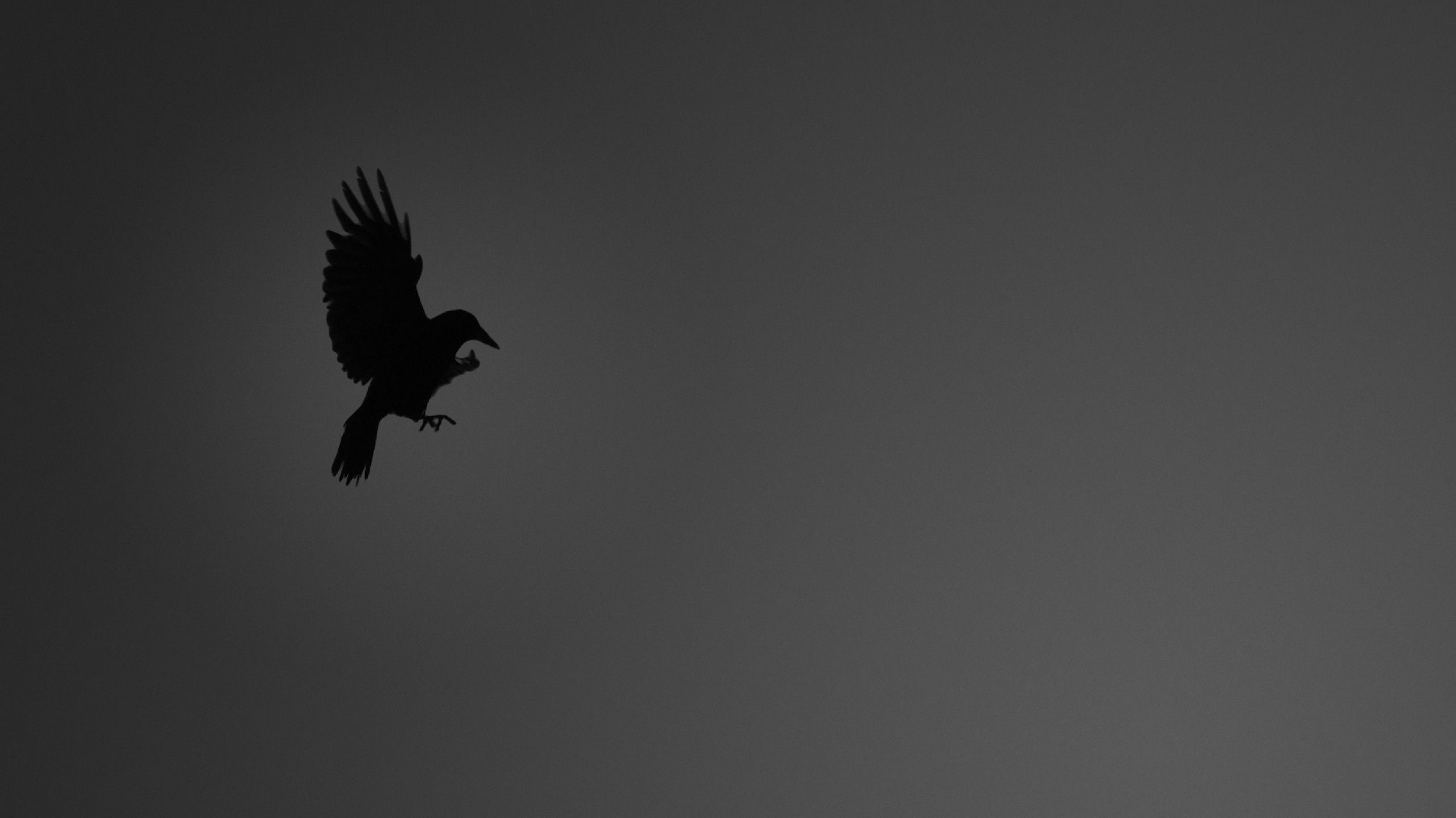 Crow Wallpapers And Pictures Download Free