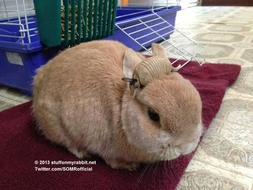 Armadillo, Stuff on My Rabbit