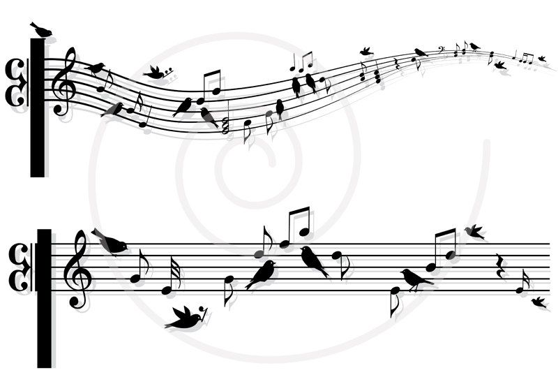 Musical notes with birds, music sheet, animal, digital art