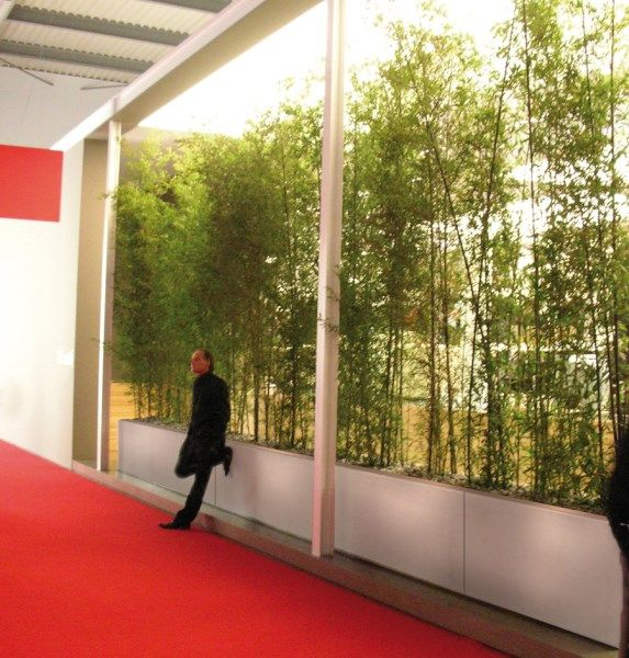 Low barriers planted with tall bamboo to create a tall for Tall planters for privacy
