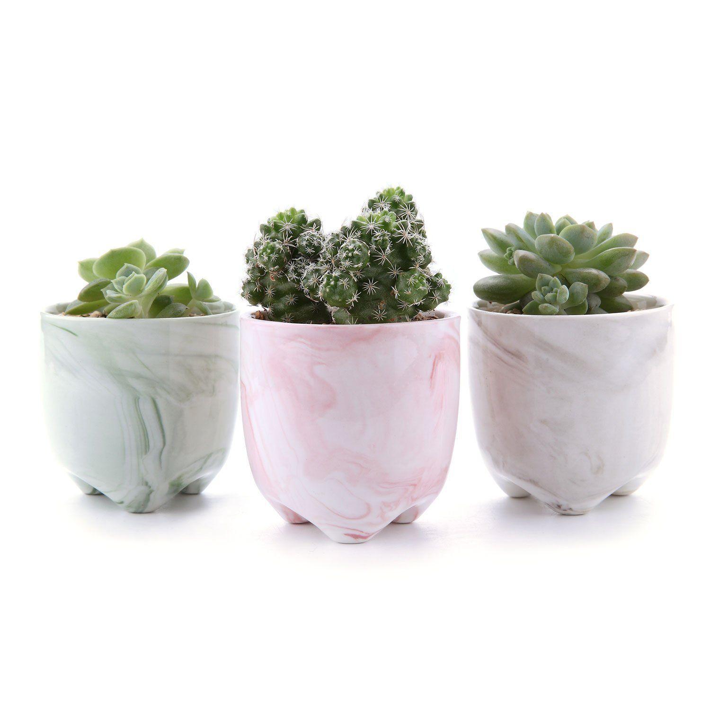 Werbung* Töpfe für Sukkulenten und Kakteen 3er Set | plants ...
