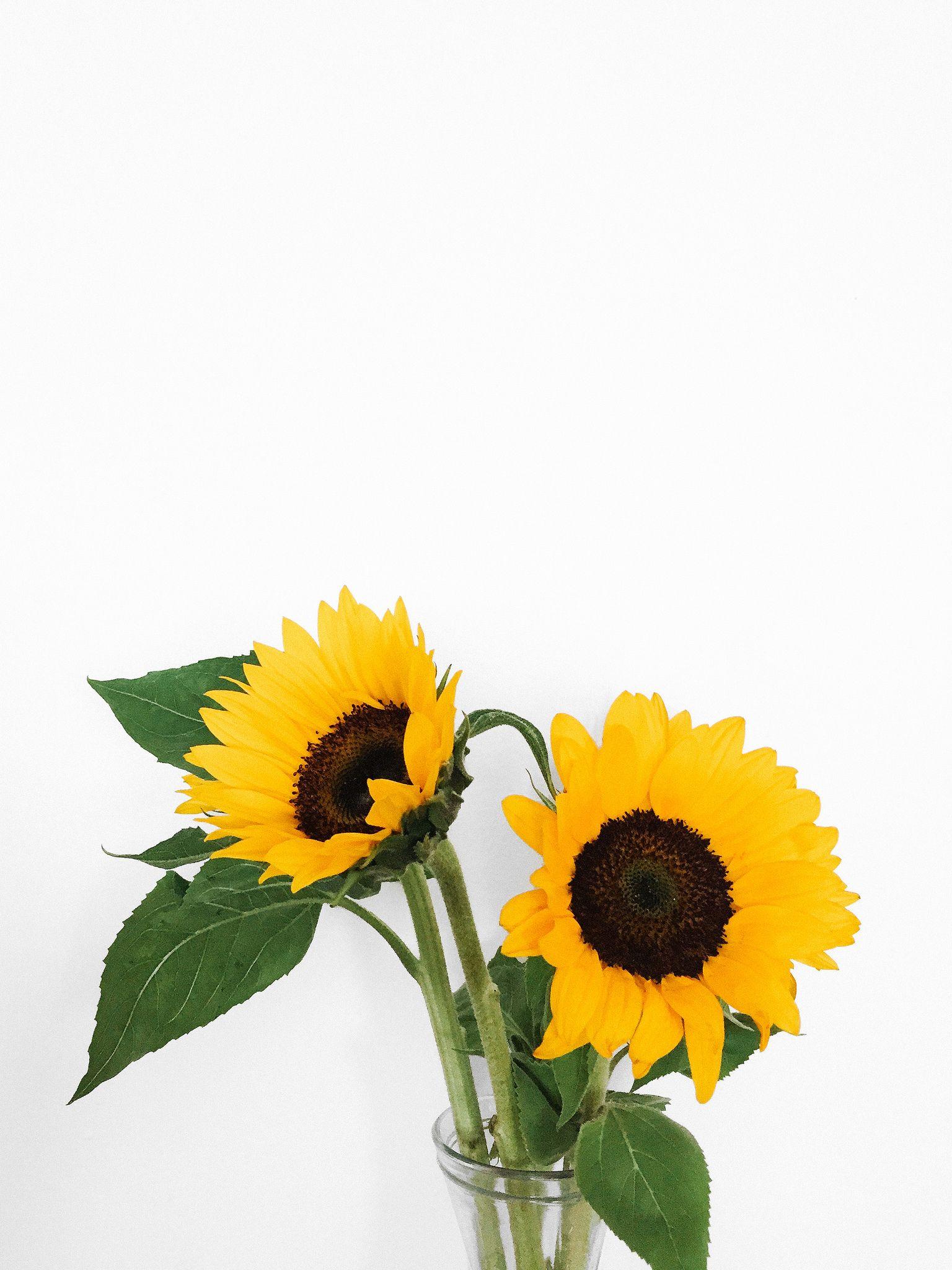 Aesthetic Yellow Sunflower Wallpaper