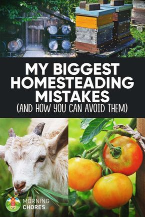 8 Dreadful Mistakes I Made When Creating My Dream Homestead (and How to Avoid Them) is part of Homesteading skills, Homestead farm, Homesteading, Urban homesteading, Homesteading diy, Backyard farming - I made many mistakes when I just started my homesteading journey  Here are all 8 of the costliest mistakes and how you can avoid them