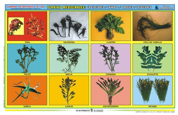 Lamina De Plantas Medicinales Imagui Pokemon Art