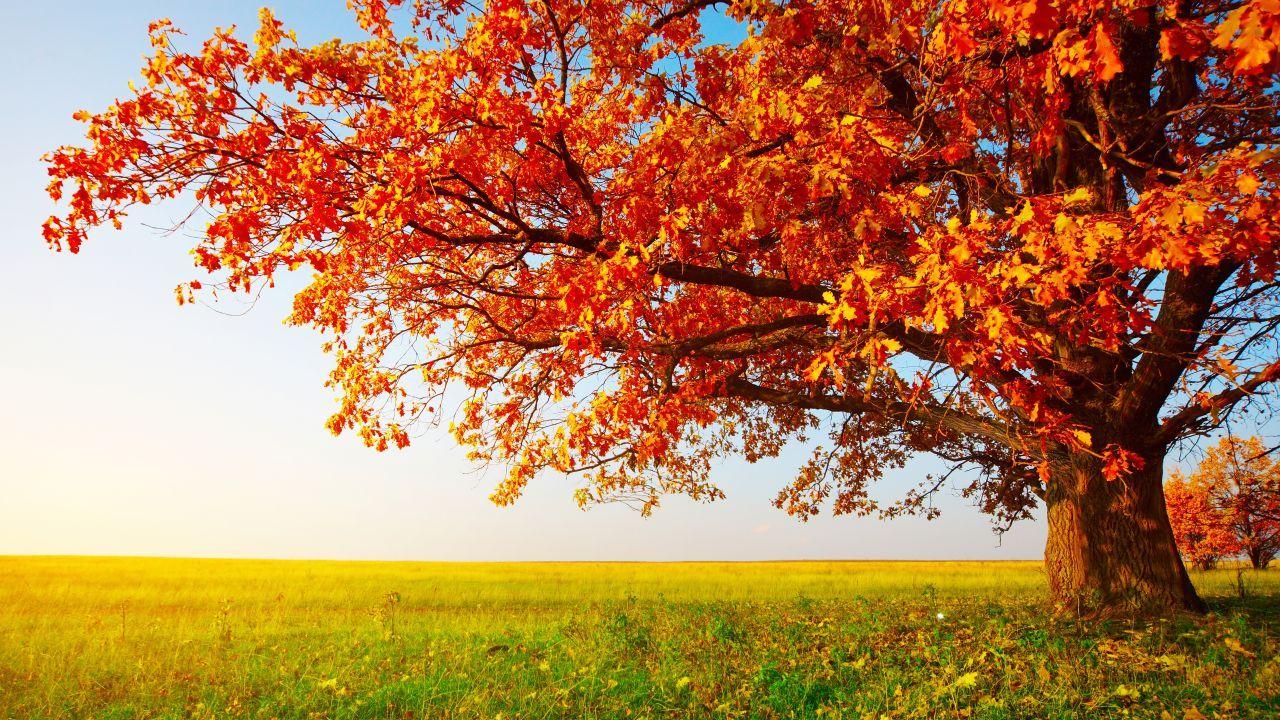 Autumn Tree Leaves Field Grass 8k Horizontal Tree Wallpaper Phone Beautiful Scenery Wallpaper Autumn Trees Autumn grass field mountain forest trees