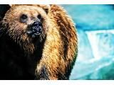 A Bear of a Poem: Composing and Performing Found Poetry  ReadWriteThink NB NB NB NB     Lessonplan