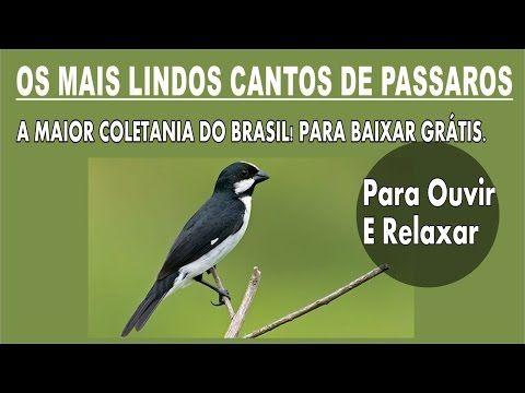 PARA COLEIRO TUI BAIXAR DE OUVIR CANTO TUI