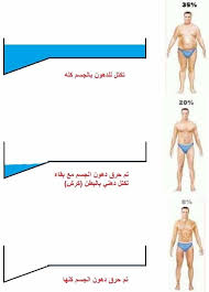 أقوى 6 طرق لتخسيس الكرش وحرق دهون الجسم كلها Egyfitness Movie Posters Movies