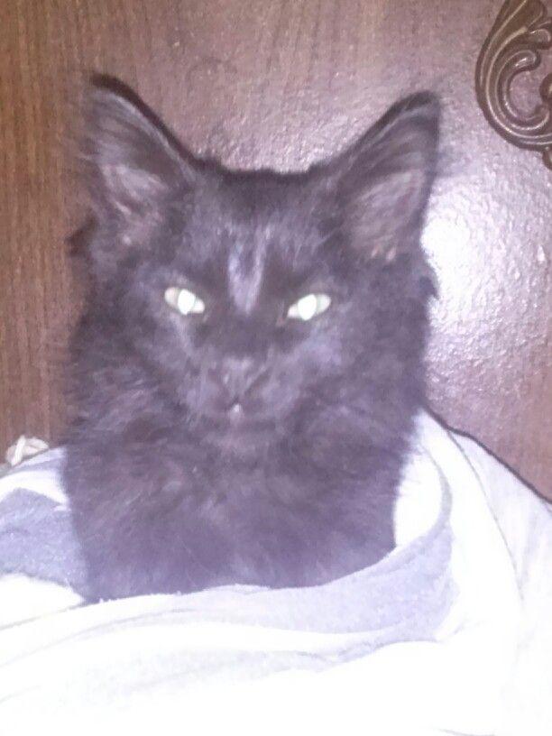 Uy que miedo...  Ese gato es el diablo....  #666